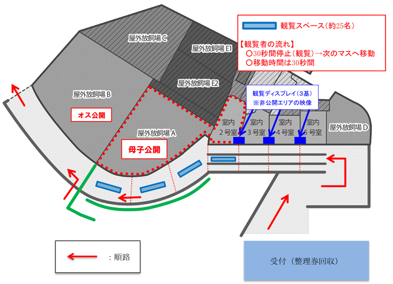 上野動物園パンダのシャンシャン観覧ルート